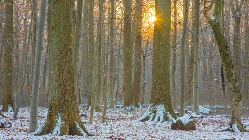 Winter im Kottenforst