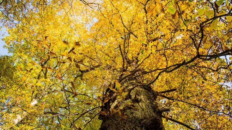 Herbsteiche