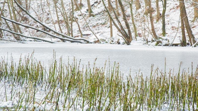 Hirschweiher im Winter